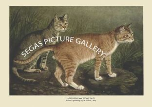 ABYSSINIAN and INDIAN CATS (From a painting by W. Luker, Jun)